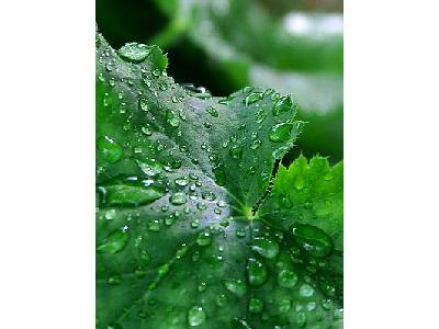 Photo Water Droplets Plant