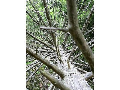 Photo Fallen Branshy Tree Plant