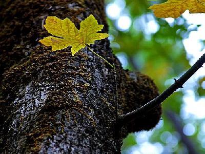 Photo Oak Tree Travel