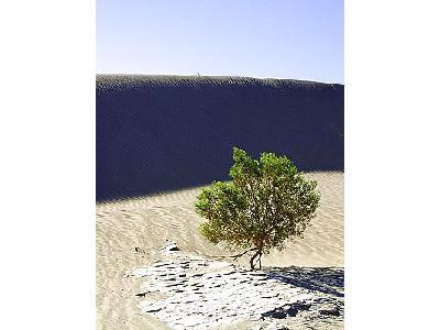 Photo Sand Dunes 3 Travel