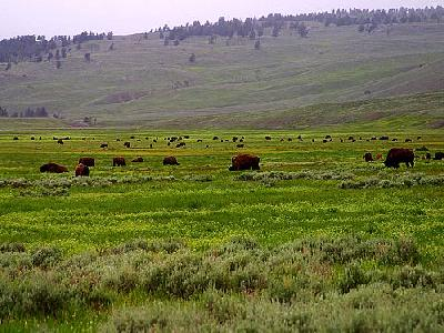 Photo Lamar Valley Travel