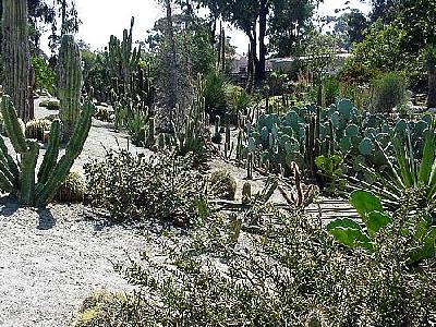 Photo Cactus Garden Travel
