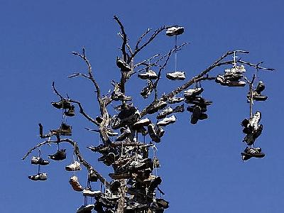 Photo Shoe Tree Travel