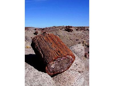 Photo Petrified Wood 2 Travel