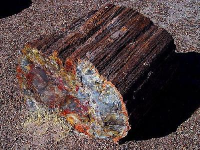 Photo Petrified Wood 3 Travel