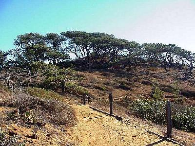 Photo Torrey Pines State Park Travel
