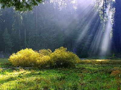 Photo Rays On The Meadow Travel