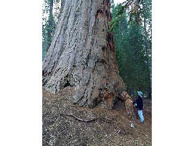 Photo Sequoia Travel