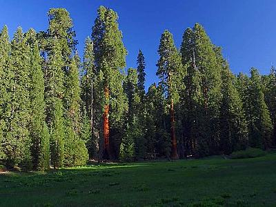 Photo Sequoia 2 Travel