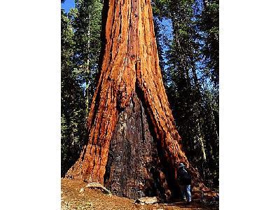 Photo Sequoia 3 Travel