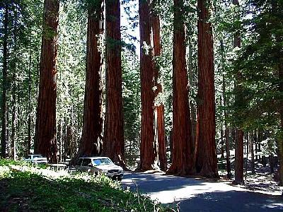 Photo Sequoia Park 4 Travel