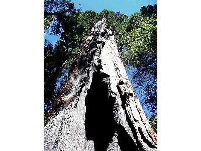 Photo Sequoia Park 5 Travel