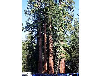Photo Sequoias Travel