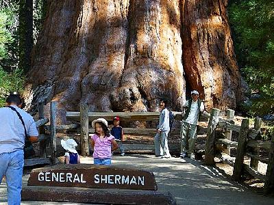 Photo Sherman Tree 2 Travel