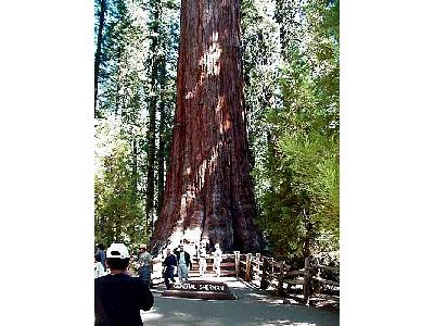 Photo Sherman Tree 3 Travel