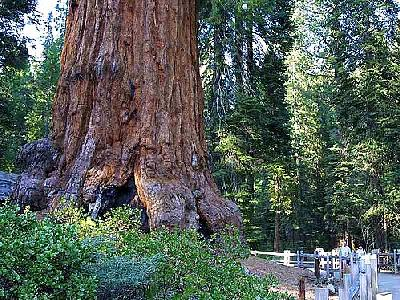 Photo Tree 2 Travel