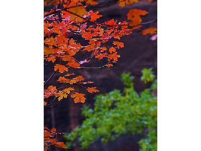 Photo Zion Autumn Travel