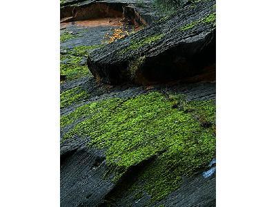 Photo Zion Canyon Moss Travel