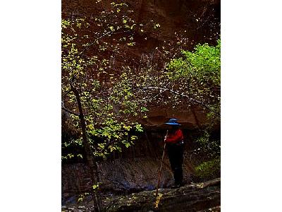 Photo Zion Narrows 2 Travel