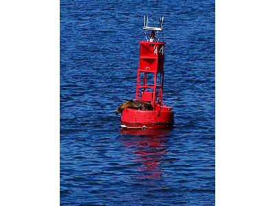 Photo Buoy Seal Other