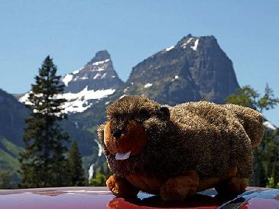 Photo Plush Marmot Other
