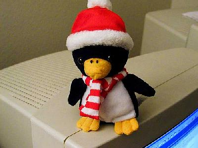 Photo Penguin Other