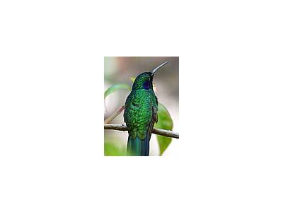 Photo Small Hummingbird Animal