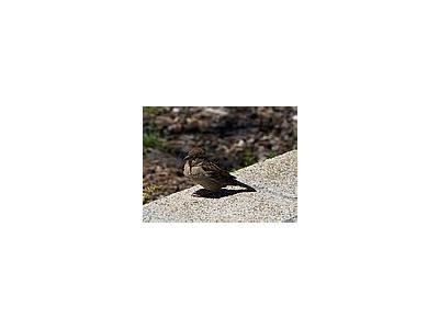 Photo Small Little Bird Animal