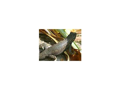 Photo Small Lizard Animal