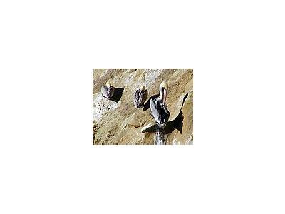 Photo Small Ocean Birds 3 Animal