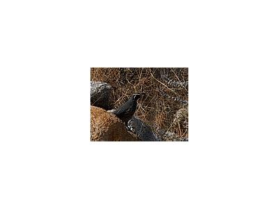 Photo Small Quail Animal