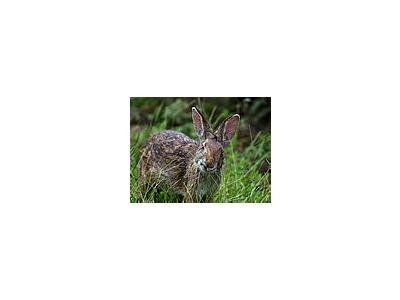 Photo Small Rabbit Animal