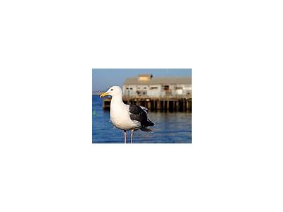 Photo Small Seagull Animal