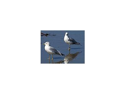 Photo Small Seagulls Animal