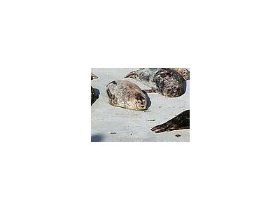 Photo Small Seals 4 Animal