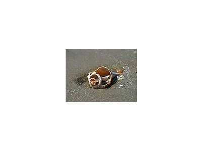 Photo Small Shell Animal