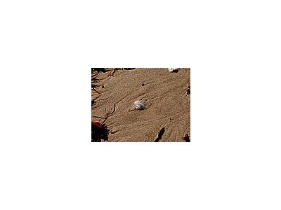 Photo Small Shell In The Sand Animal