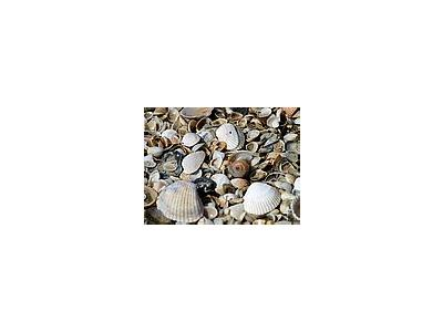 Photo Small Shells Animal