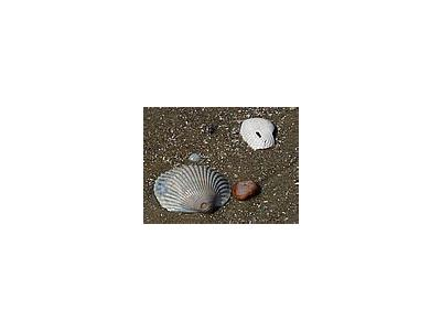 Photo Small Shells 2 Animal