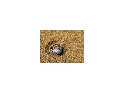 Photo Small Shells And Sand Animal