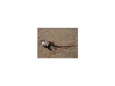 Photo Small Shells And Seaweed Animal
