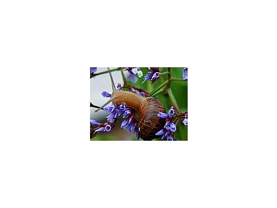 Photo Small Snail Animal