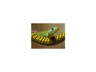 Photo Small Snake Animal