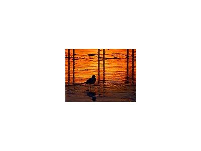 Photo Small Sunset Bird Animal
