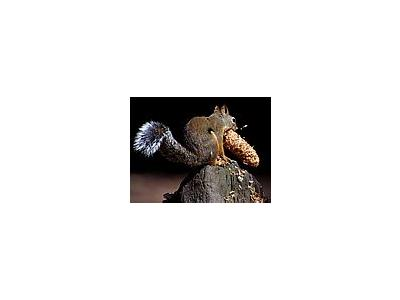 Photo Small Squirrel 4 Animal