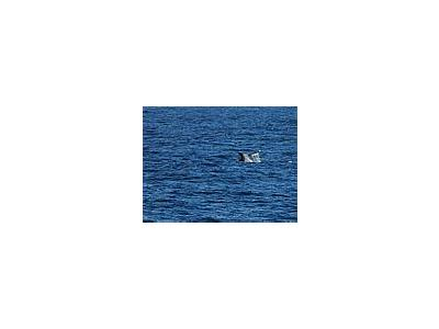 Photo Small Whale Tail Animal