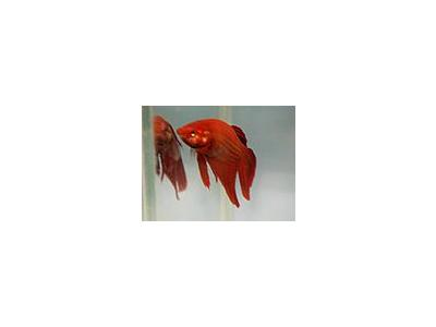 Photo Small Aquarium Fish 29 Animal