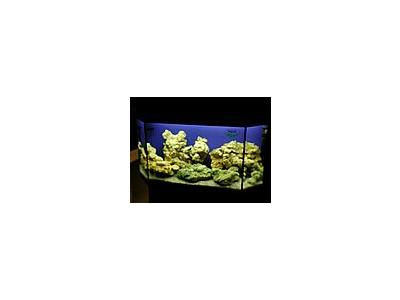 Photo Small Aquarium Fish 37 Animal
