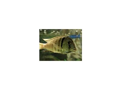 Photo Small Aquarium Fish 42 Animal