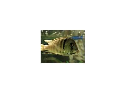 Photo Small Aquarium Fish 42 Animal